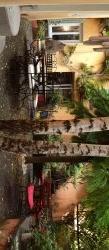 Le Petit Siam-patio-espace-exterieur- les bouleaux