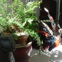 Le Petit Siam- Les animaux du jardin intérieur