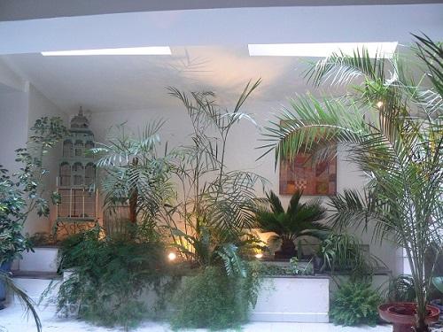 le jardin int rieur en photos de la verdure dans la maison le petit siam. Black Bedroom Furniture Sets. Home Design Ideas